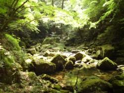 2008年8月18日の赤目滝 5