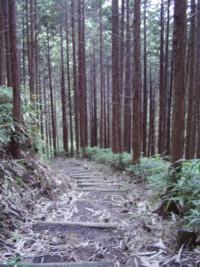 「出合」からハイキングコースへ