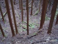 山の中の倒れてる木々