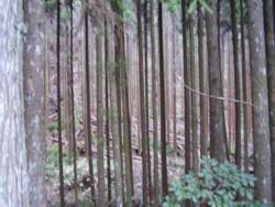 マグリッドの絵のような木々の風景