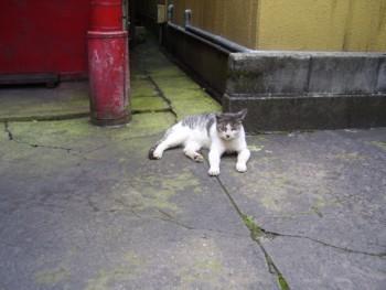 2009年8月13日  富山の猫
