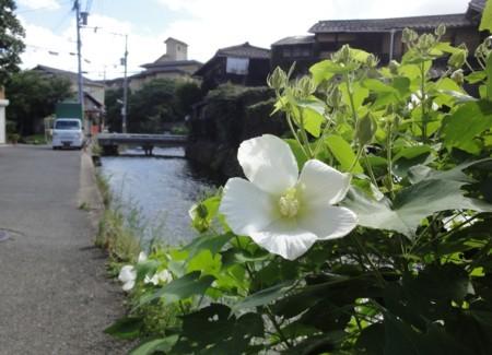 京都市美術館へ行く途中の花 2012年8月5日