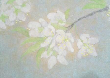 スモモの花 アップ