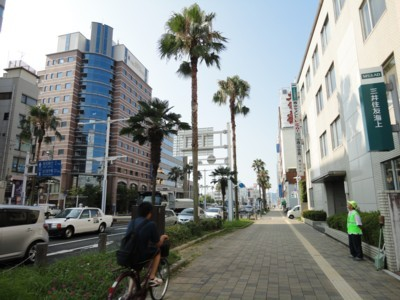 2010年8月3日 高知駅前 街路樹