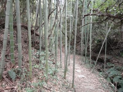 豊島 「トムナフーリ」2