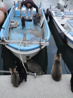 家浦港の猫たち